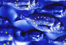 Europe's liquidity rules are holding up… for now